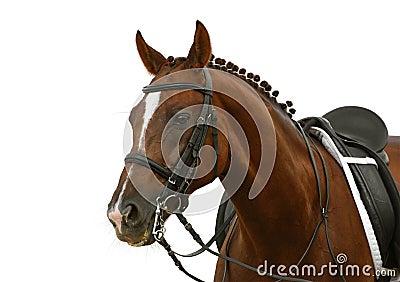 Koń kobylak