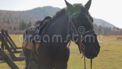 Koń stoi obok ogrodzenia z zupełną nicielnicą robić rzemienni i kruszcowi paski outside zbiory wideo