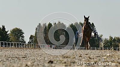 Koń Szorstki Z Trockami Do Końca zbiory