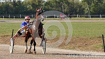 Koń Wyścigowy Z Jockey Na Torze zbiory wideo