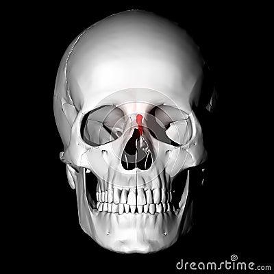Kość nosowa