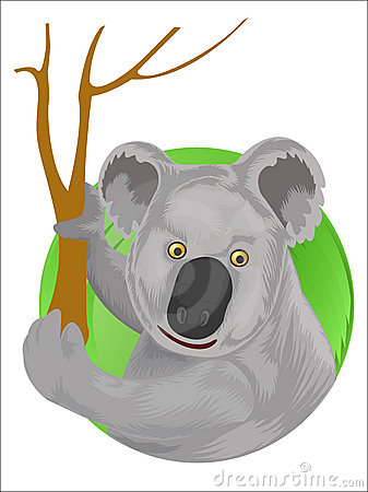 Koala on dry eucalyptus tree