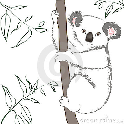 Koala sitting in a tree.