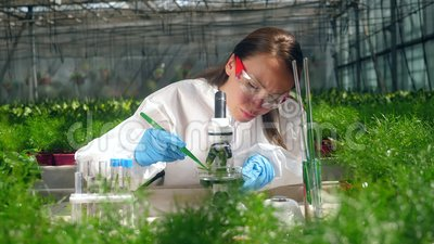 Kobieta botanika używa mikroskopu podczas pracy z kiełkami zbiory wideo