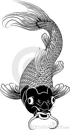 Free Kohaku Koi Carp Fish Illustration Royalty Free Stock Photo - 12027375