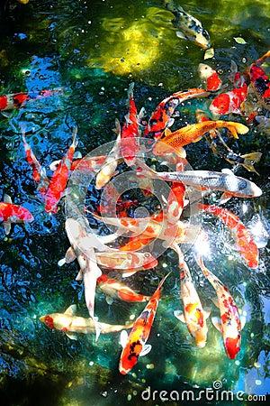 Free Koi Fish Pond Stock Images - 58747994