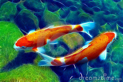 Koi or carp fish yin yang in pond