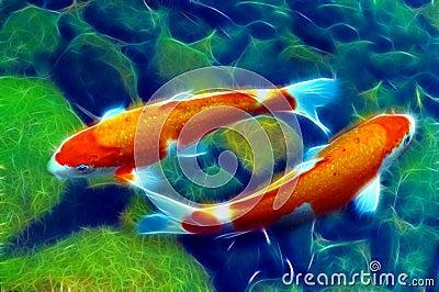 Yin yang koi or carp fish in pond