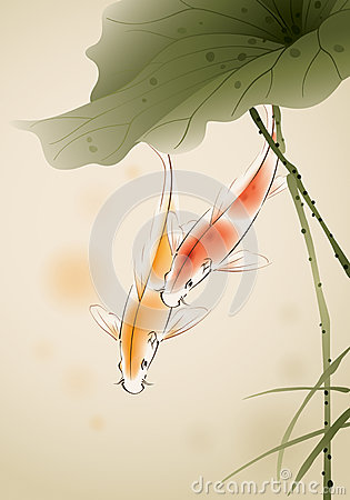 Koi fishes in lotus pond