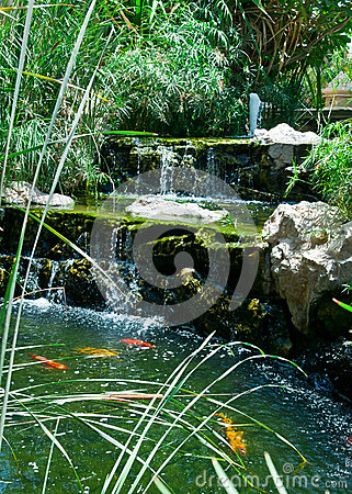Free Koi Pond Royalty Free Stock Photography - 25295257