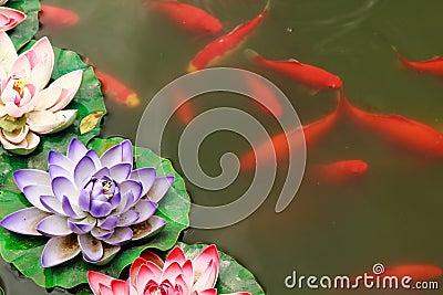 Pin fish pond lotus leaf wallpapers feed on pinterest for Koi fish pond lotus