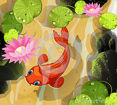 Free Koi Swimming In The Pond Royalty Free Stock Photos - 69546628