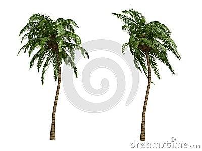 Kokosnöten gömma i handflatan