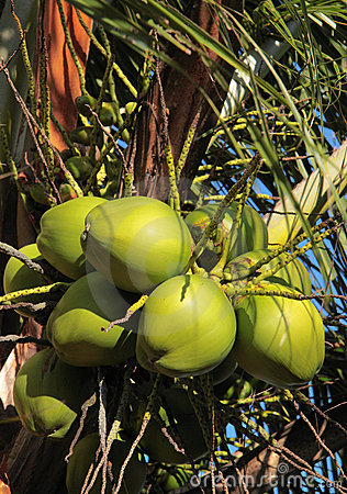 Kokosnötgreen