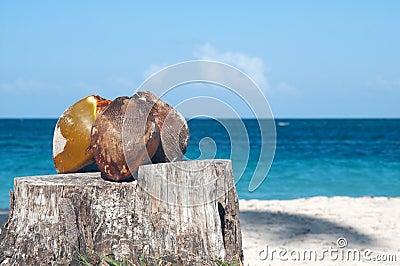 Kokosnoten op stomp