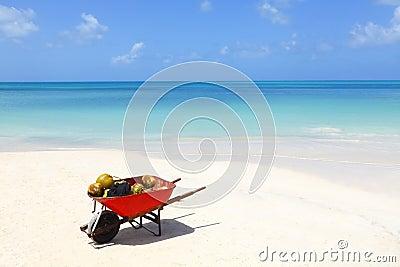 Kokosnoten op tropisch Caraïbisch strand