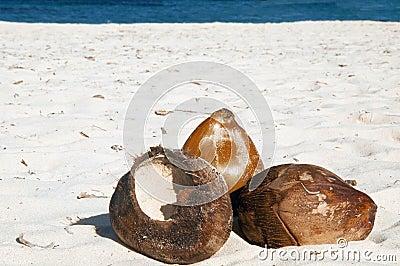 Kokosnoten op zand