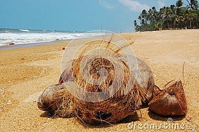 Kokosnüsse auf dem Strand
