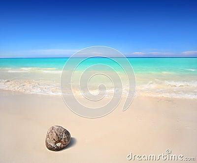 Kokosnuss auf dem Strand