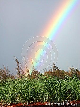Free Koloa Rainbow Royalty Free Stock Photo - 206775
