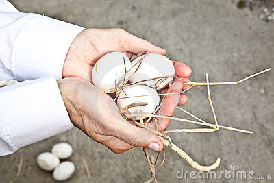 Ökologische Eier
