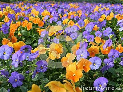Kolorowi kwiaty