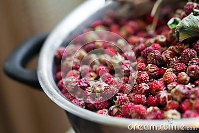 Kom met wilde aardbeien