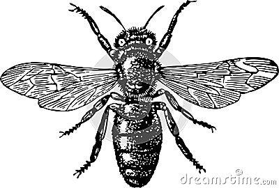 Komarnica