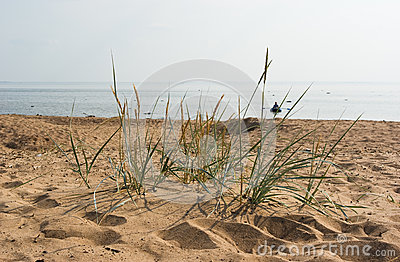 Komarovo beach of Gulf of Finland