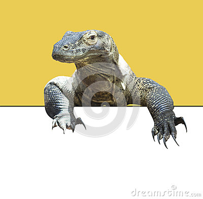 Free Komodo Dragon Royalty Free Stock Photography - 41555377
