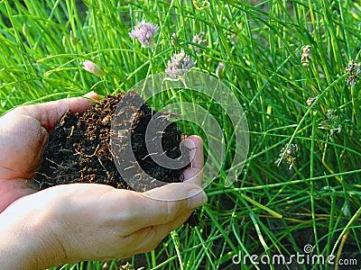 Komposttäckningrich