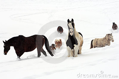 Konia śnieg