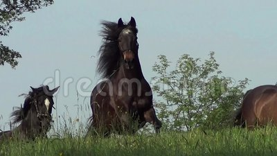 Konia cwałowanie uwalnia na łące