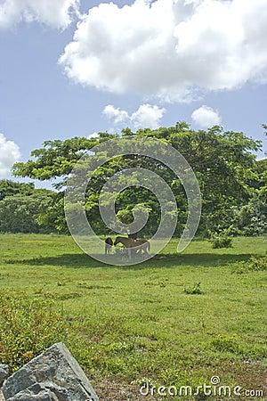 Konie i drzewo