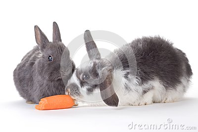 Konijntje twee en een geïsoleerde wortel,