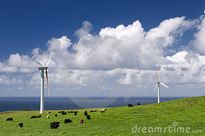Kor som betar turbinwind