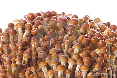 Korean Edible Mushrooms Macro