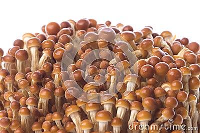 Korean Edible Mushrooms Macro