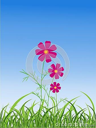 Kosmosu kwiat
