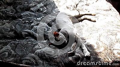 Kotów zwroty od strony strona zbiory wideo