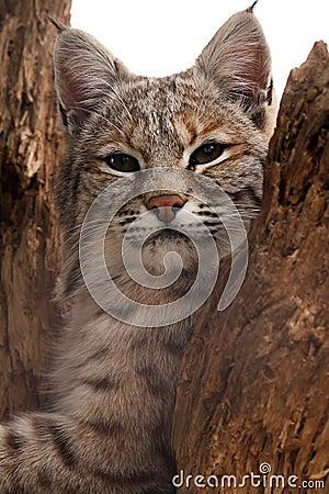 Kot ciekawy