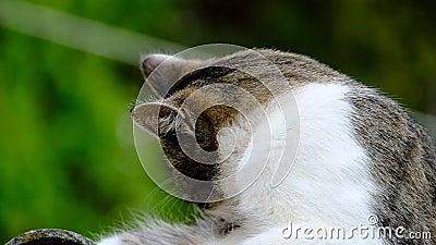 Kot domowy na dachu zbiory
