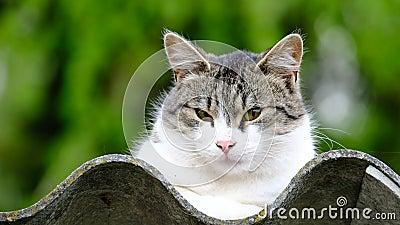 Kot domowy na dachu zdjęcie wideo