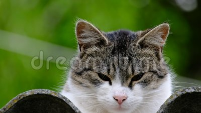 Kot domowy na dachu zbiory wideo