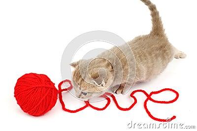Kot miłość