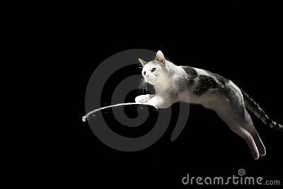 Kot skacze