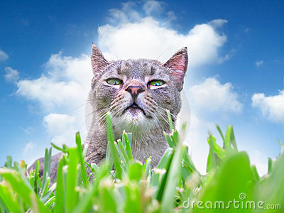 Kot trawy.