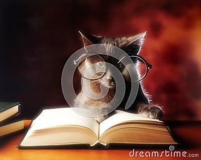 Kota czytanie