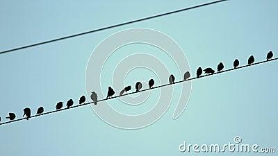 Krähen auf einer Stromleitung