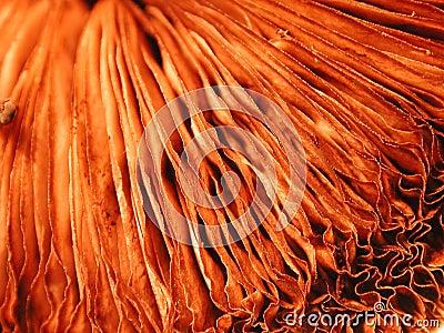 Kråsnaturen textures unikt